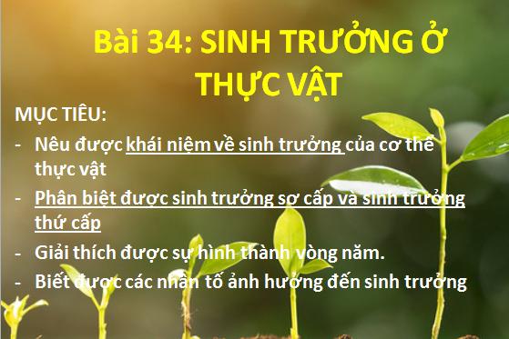 Sinh Trưởng Ở Thực Vật - THPT Nguyễn Đình Chiểu - Long An