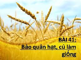 Bảo quản hạt củ làm giống  - THPT Vĩnh Hưng