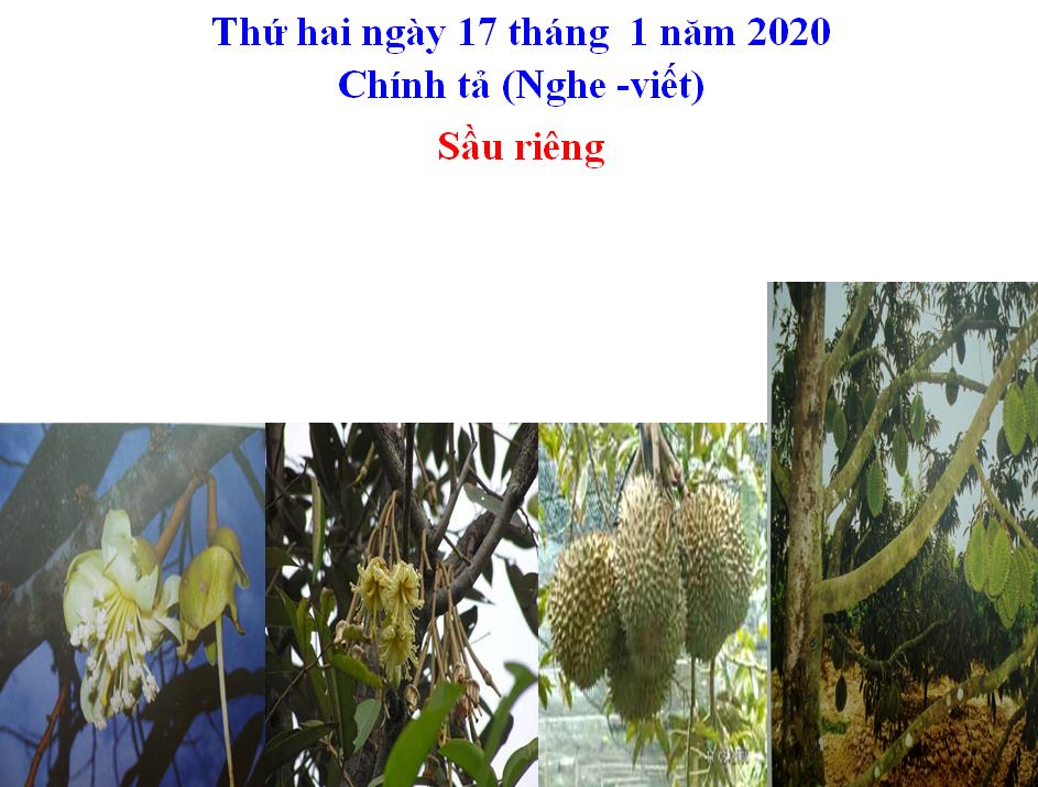 Nghe-Viết Sầu Riêng_TH&THCS Vĩnh Trị_Vĩnh Hưng